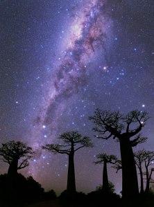 Milky Way Over Baobabs, Morondava, Madagascar