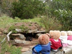 Tasmanian Devil Conservation Park