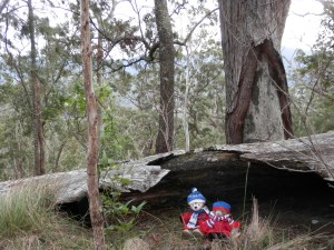 Hiking Western Peak of Spicers Mountain