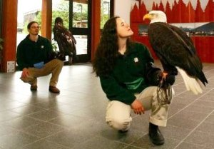 Alaska Raptor Rehabilitation Center