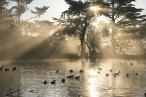 Stow Lake, the largest of the manmade lakes in Golden Gate Park