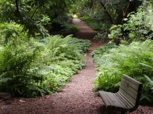 Redwood trail through the San Francisco Botanical Garden
