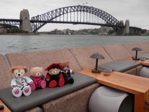 Little Bears Around Sydney