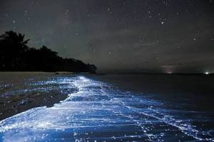 The Sea of Stars on Vaadhoo Island, Maldives