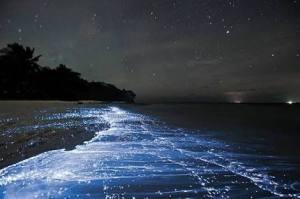 The Sea of Stars on Vaadhoo Island, Maldives