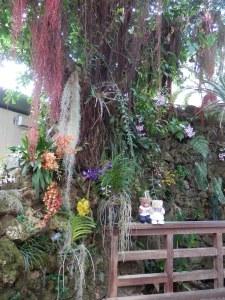 US Botanic Garden - Orchids