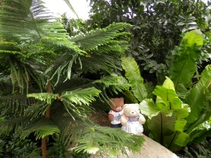 US Botanic Garden - The Tropics