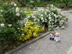 US Botanic Garden - National Garden Rose Garden