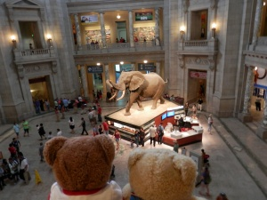 National Museum of Natural History  - African Elephant