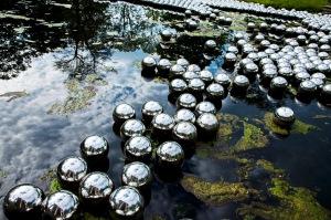 Narcissus Garden