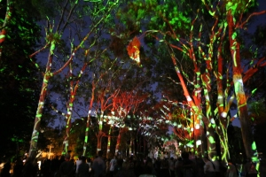The Trees Speak: 700m tunnel of light, sound and stories projected across red-flowering gums in Kings Park