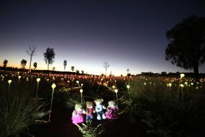 Uluru Field of Light