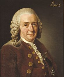 1735: Carl Linnaeus publishes the first volume of 'Systema Naturae', which laid the foundations for taxonomy. Later he suggested that plants descend from a common ancestor.