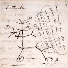 1837: Tree of life sketch by Darwin