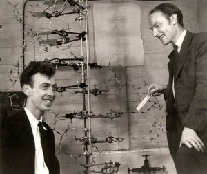 1953: James D. Watson and Francis Crick discover the structure of DNA, making it possible to study the molecular biology of evolution.