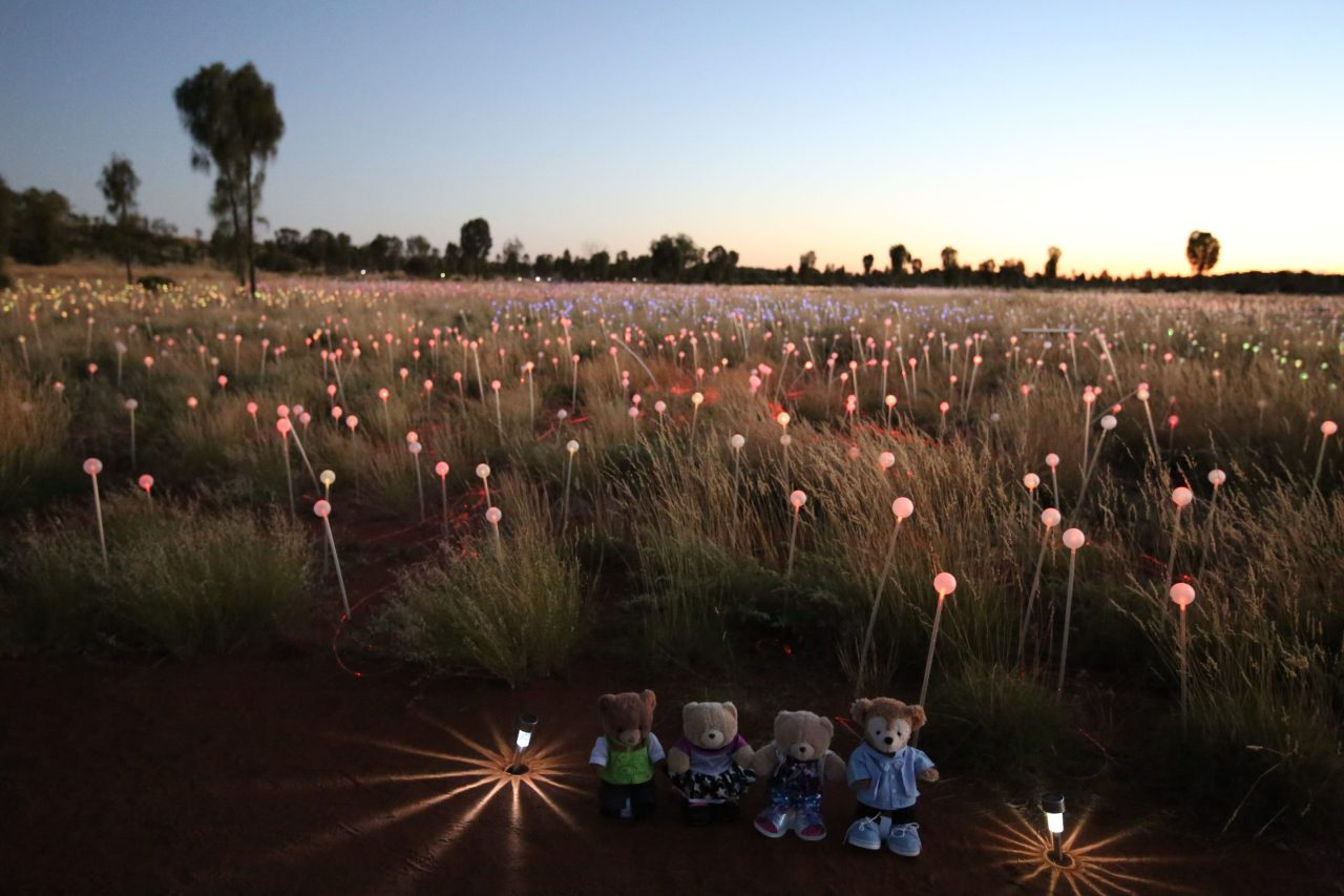 Sunrise at Uluru Field ofLight