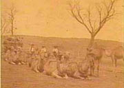 Edward Ryan's camel team transporting a well sinking party for the Overland Telegraph Line, 1885 (State Library of South Australia)